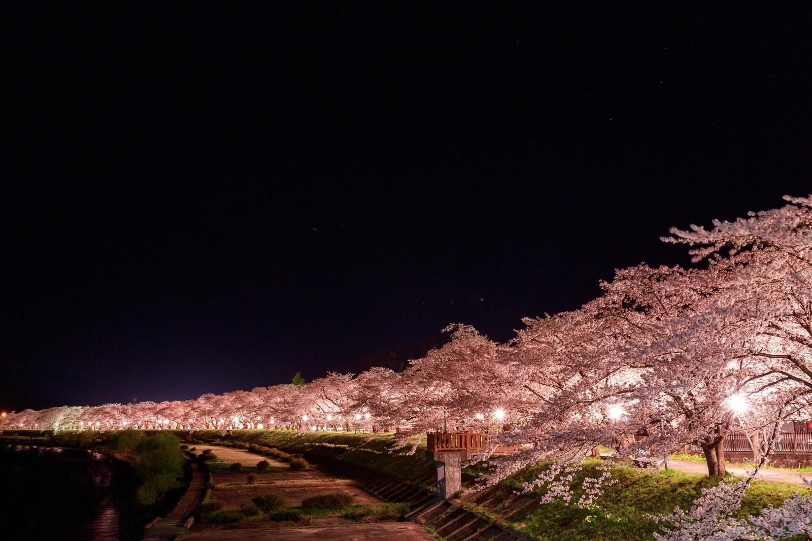 桜開花の期間は?予想とおすすめスポット